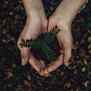 The Gift of Wonder - photo of hands holding young green plant